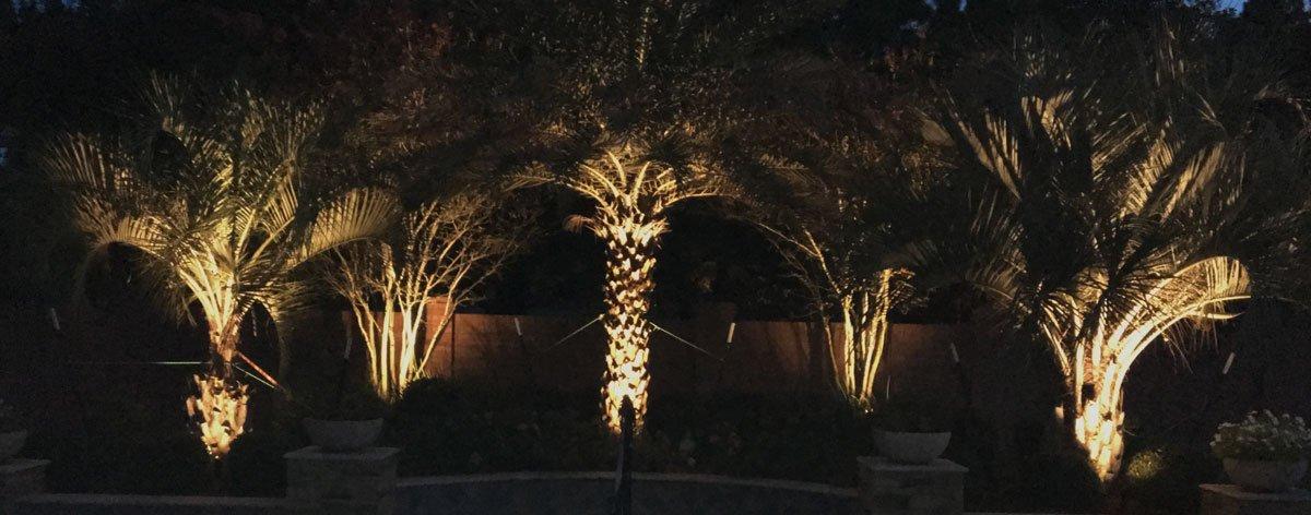 lighting trees